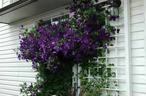 Image Result For Home And Gardens U